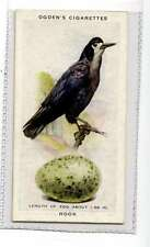 (Jk355-100) Ogdens,British Birds & Their Eggs,Rook,1939 #34