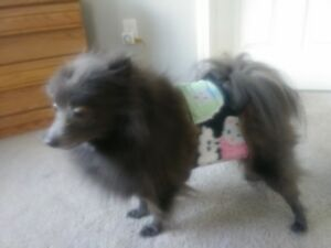 """""""Cumber-Blunder"""" Belly Band for Male Dogs - Colorful Hedgehogs Polar Fleece - S"""