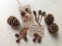 75 mixed PINE SEQUOIA FIR CONES 25 Large/50 Small : Schools, Christmas, Florist