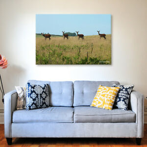 Exmoor Deer - Various Sizes - North Devon Canvas - Ready to Hang