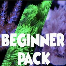 More details for kenya tree / pulsing xenia /  gsp ultra neon frags soft corals beginners pack