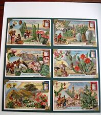 1907 Trade Card Set - Liebig's Fleisch-Extract - Cactus *