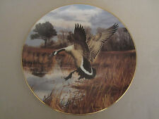 CANADA GOOSE - ATLANTIC FLYWAY collector plate DAVID MAASS Wildlife GEESE