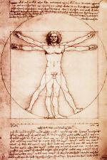 Vitruvian Man Poster Print by Leonardo da Vinci, 24x36