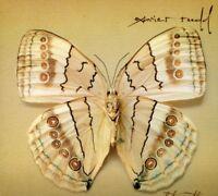 Xavier Rudd - White Moth [New CD]