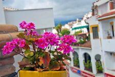 Multi-Colour Floral Original Art Photographs
