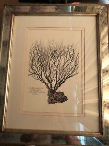 Trowbridge Gallery Limited Edition Sea Botanical Smoky Mirror Frame - Dbl Matte