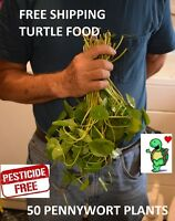 50 pennywort stems live plants Turtle Herp food Organic no chemicals
