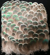 100+ Iridescent Green Peahen Body Plumage Feathers Lot V5 Craft Supply Fly tying