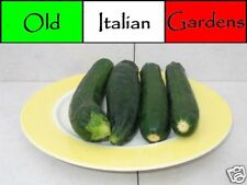 40 Black Beauty Zucchini Seeds Easy Growing Productive Great Tasting Non GMO