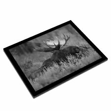 A3 Glass Frame BW - Wild Moose in Natural Wilderness  #37582