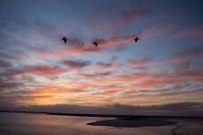 2017 19X33 PHOTO ON ALUMINIUM 3 PELICANS FIRE SUNSET MARCO ISLAND BEACH FLORIDA