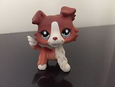 Littlest Pet Shop LPS Rare Brown White Collie Puppy Dog #1542 Blue Eyes NICE
