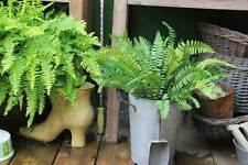 REAL TOUCH Fern (Large) x 4 - artificial plants - 2 types available