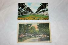 Pair of 1950 and 1970 Postcards PA Rhodadendrons and Florida Palm Trees