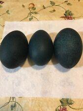Cleaned Emu Eggs