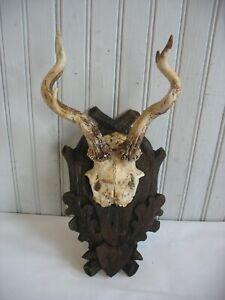 """9"""" Vintage German Black Forest Carved Wall Mount ANTLER PLAQUE Deer Stag Hunt"""