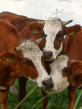 Hereford Guernsey Holstein cow calf bull painting art  Ed Mace