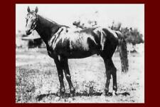 CHANT - USA Racehorse won 1894 Kentucky Derby modern Digital Photo Postcard