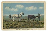 Horse Cow Plowing Farm NOVA SCOTIA Canada NS Agriculture Vintage Postcard