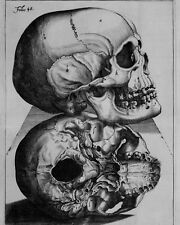 Vintage Doctor Medical Anatomy Chart Human Skull 8x10 Real Canvas Art Print New