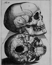 Vintage Doctor Medical Anatomy Chart Human Skull 8x10 Real Canvas Art Print New