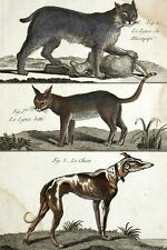 Histoire Naturelle Lynx Missipipi & Chien  - Gravure originale 18e
