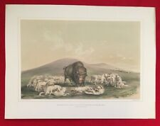 Buffalo Hunt,White Wolves George Catlin,Original Lithograph,Limited Edition 1970