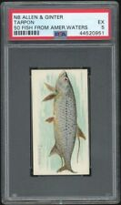TARPON 1888 N8 Allen & Ginter 50 Fish From American Waters PSA 5 EX