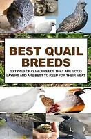 Best Quail Breeds : 10 Types of Quail Breeds That Are Good Layers and Are Bes...