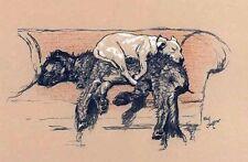 Cecil Aldin cani DIVANO A LETTO 7x4 pollici stampa