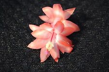 Christmas Cactus/Schlumbergera Plant~~You Choose What Variety You Want~~Group 7