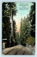 Santa Cruz, CA BIG TREE GROVE ENTRANCE RAILROAD TRAIN DEPOT REDWOODS POSTCARD