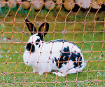 Kaninchenzaun 50 m x 65 cm Hasenzaun Elektrozaun Hasen