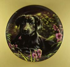 Playful Puppies A Taste Of Spring Plate Black Lab Labrador Retriever Puppy Dog