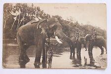 Old postcard Fine Tuskers Elephants, Ceylon