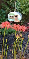 3 Fresh Bulbs - Red Spider Lily Flower Bulbs established garden recently divided