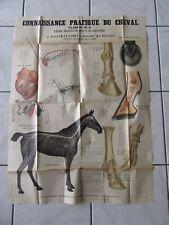 GRANDE AFFICHE ORIGINALE 1895 CHEVAL ANATOMIE HORSE