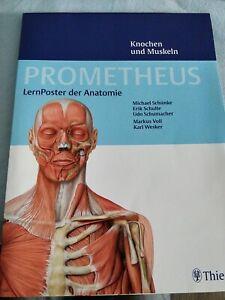 Prometheus LernPoster der Anatomie 2 Poster Muskeln und Knochen
