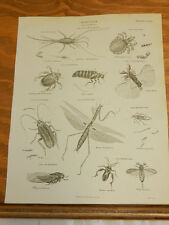 1824 Antique Print/Annulosa Class Insecta/Praying Mantis, Other Insects