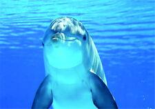 DOLPHIN VINYL STICKERS CAR VAN TRUCK TAXI LORRY ANIMAL SEA