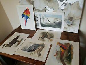 Original Old Vintage Bird Print Set Art Colour C1980