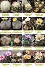 Cacti 240 SEEDS. 16 kinds - Packed separately. Own greenhouse.