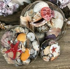 More details for basket of real sea shells home bathroom decor | aquarium | crafts - 3 sizes