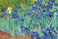 Vincent Van Gogh Irises 1890 Flowers Art Print Poster 36x24 inch