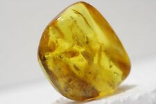 RARE big STONE Amber with Inclusions SPIDER 29,7 grams