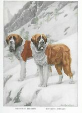 Saint Bernard - 1927 Color Dog Art Print - Matted