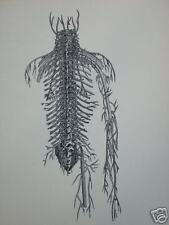 vintage ANATOMY MEDICAL PRINT vain vane BLOOD torso ARM