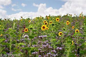 BIENENWEIDE 5 kg BUNTE Bienenwiese TOP Saatgut Blühstreifen Honigpflanzen Nektar