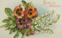 Best Wishes Pansy Flower Written On Unposted Divided Back Vintage Postcard